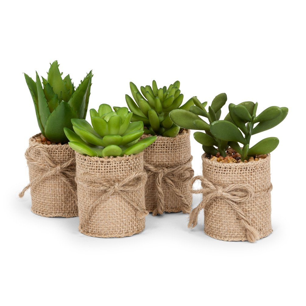 Succulents in Burlap Wrap. Set of 4